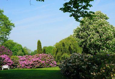 Quand et comment tailler les arbustes d'ornement