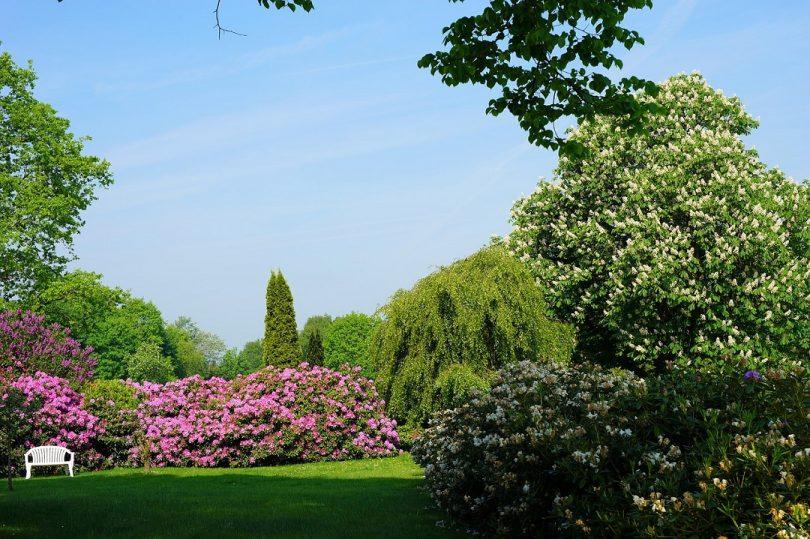 Quand et comment tailler les arbustes d ornement le blog - Quand et comment tailler les rosiers ...
