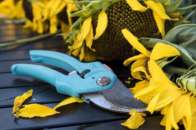 outils pour la taille des arbustes