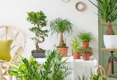 plantes-interieur-bienfait