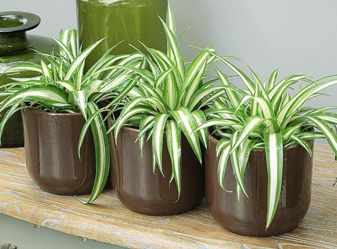 plantes interieur depolluante
