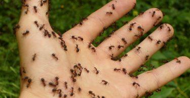Comment se débarrasser des fourmis dans le jardin