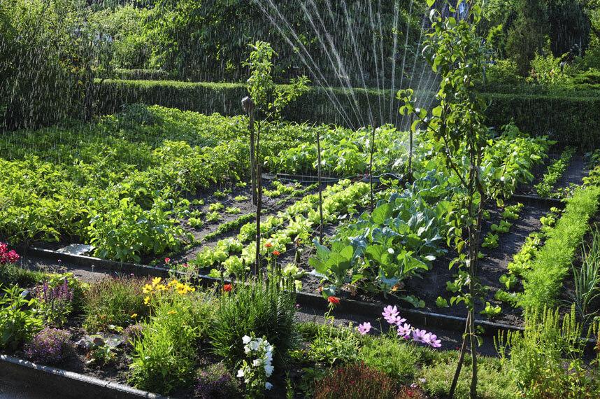 conseils jardinage débutants