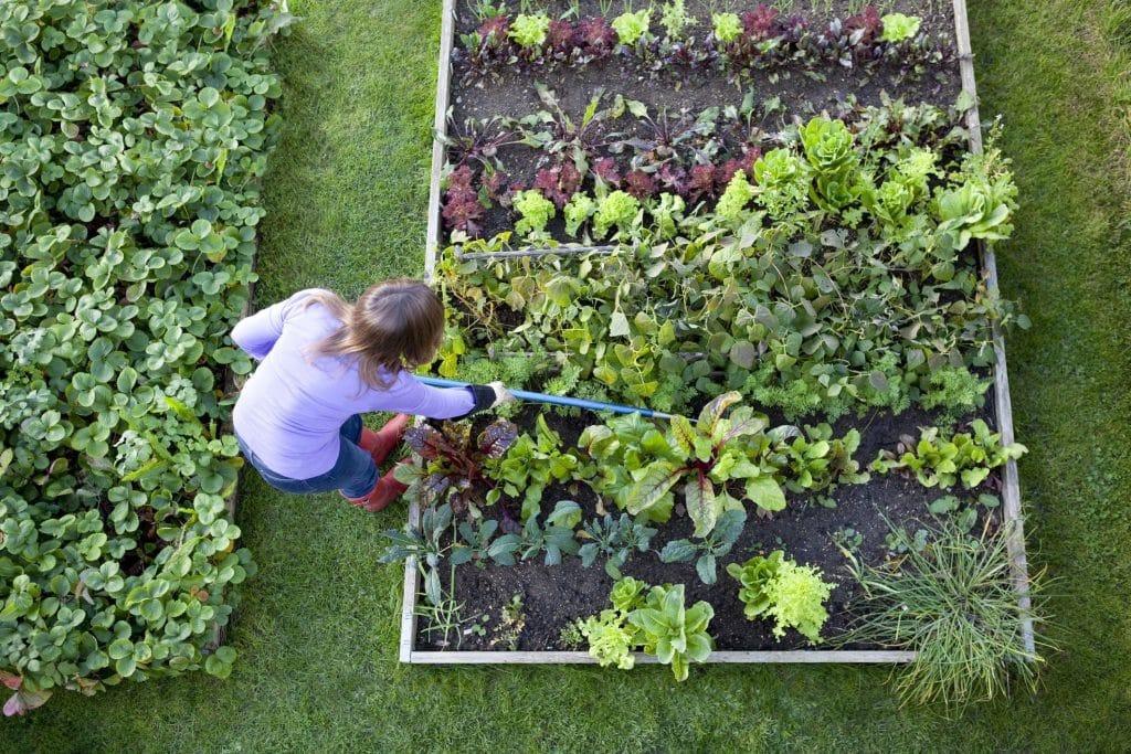 debuter-jardinage