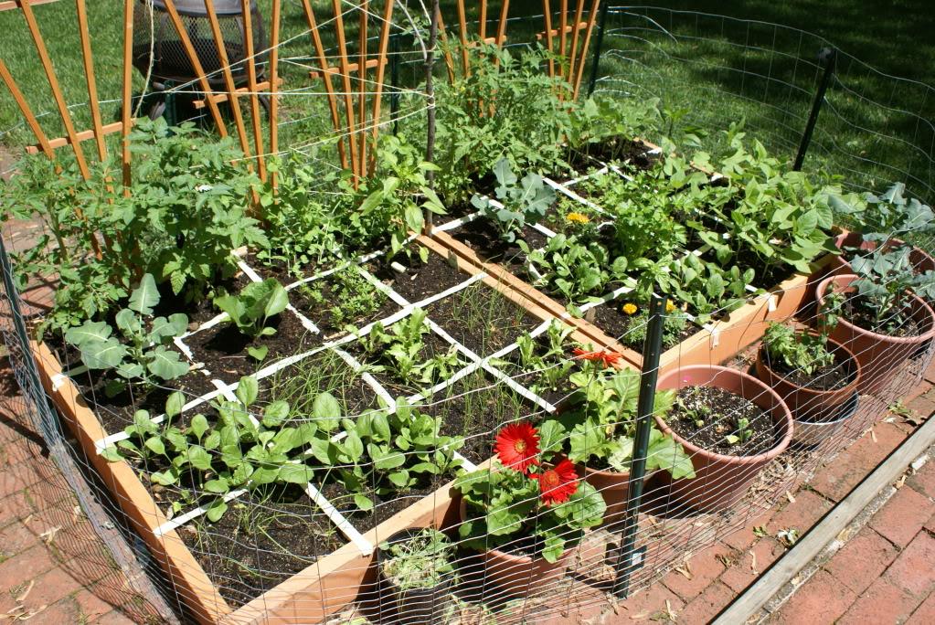 jardin espace debutant