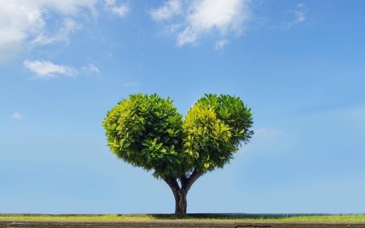 60 astuces pour la Journée de la Terre et bien plus