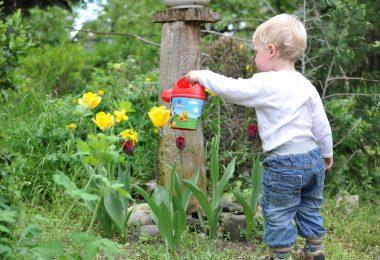 conseils pour réduire le gaspillage d'eau pour arroser son jardin