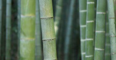 Barrière anti-rhizome limiter la propagation du bambou