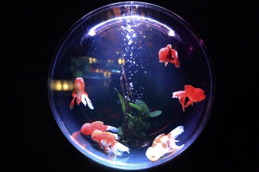 mettre eau demineralisee dans aquarium