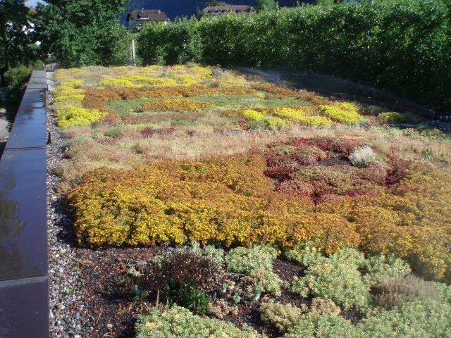 plantes sur un toit vert