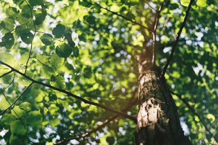 quels arbres et arbustes croissance rapide 2