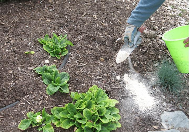 utilisation terre de diatomée dans le jardin