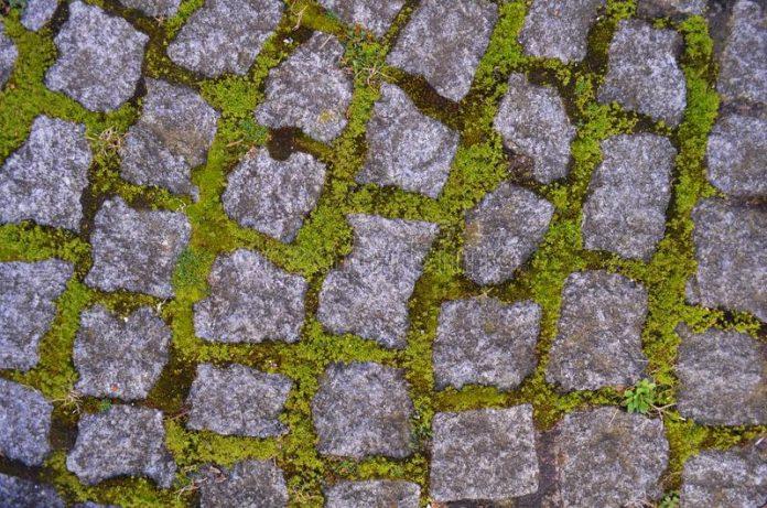 Anti-mousse naturels : les solutions écologiques contre la mousse