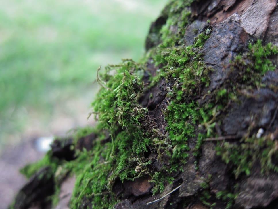 Anti-mousse naturels solutions écologiques contre la mousse