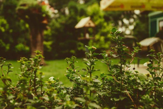 conseils pour aménager un petit jardin
