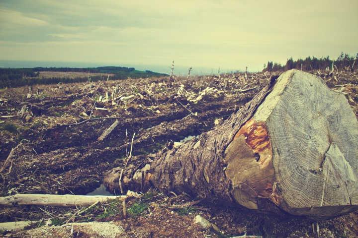 greenwashing - couvrir des exactions environnementales et sociétales