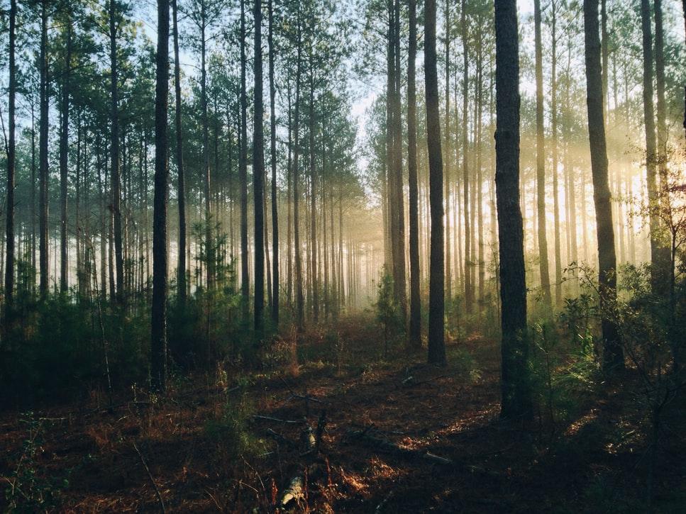 Pier Import et ecotree reforestation 4