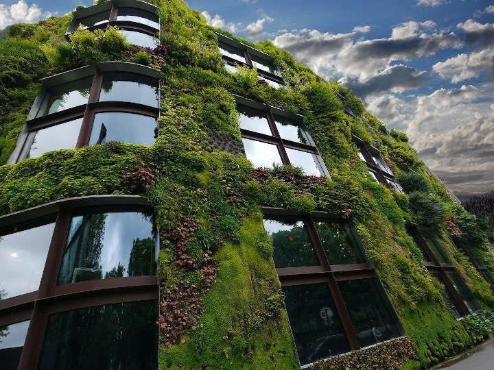 mur végétal en ville