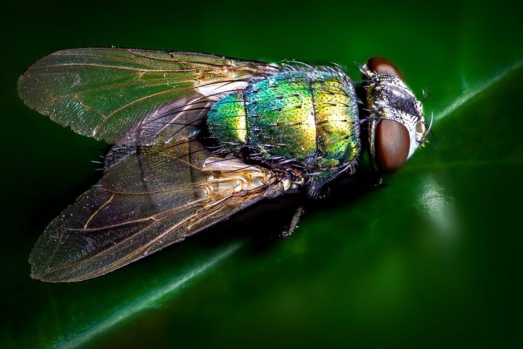 Anti-mouche naturel : les répulsifs écologiques efficaces