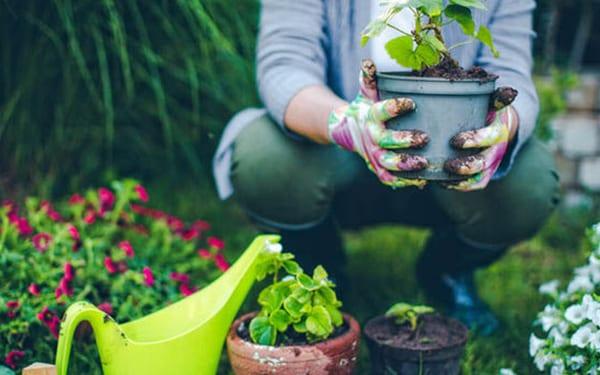 créer un jardin bio