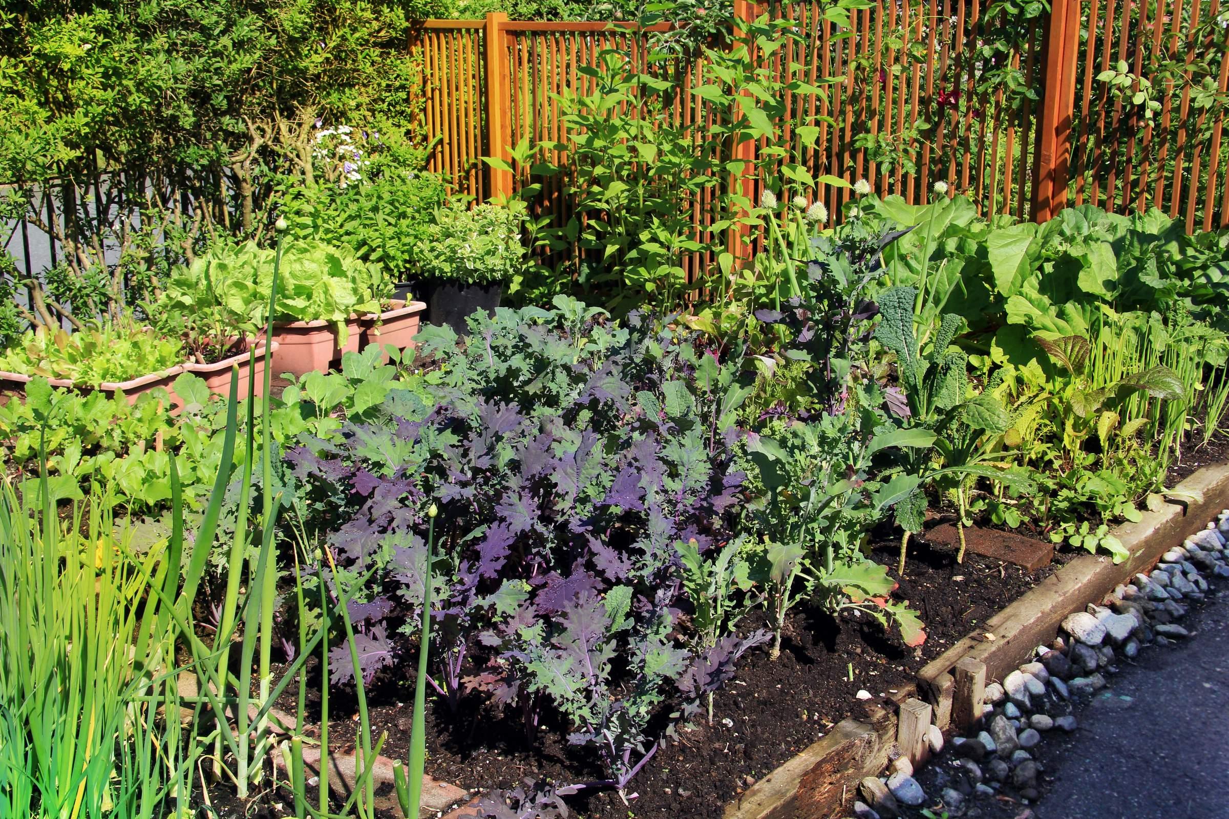 organiser un jardin pour favoriser la biodiversité
