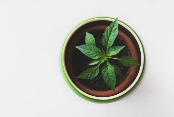 Comment faire pousser des herbes aromatiques chez soi ?