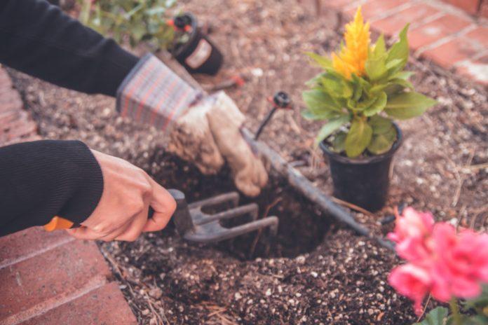 que faire au jardin en mars.jpg
