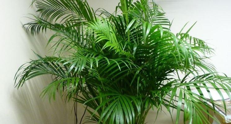 palmier des montagnes sans lumiere
