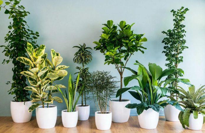 plantes d'intérieur pour peu de lumiere