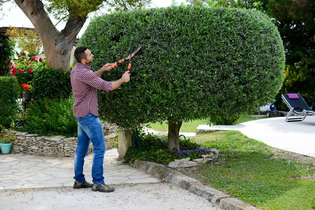 Peut-on obliger un voisin à couper ses arbres ?