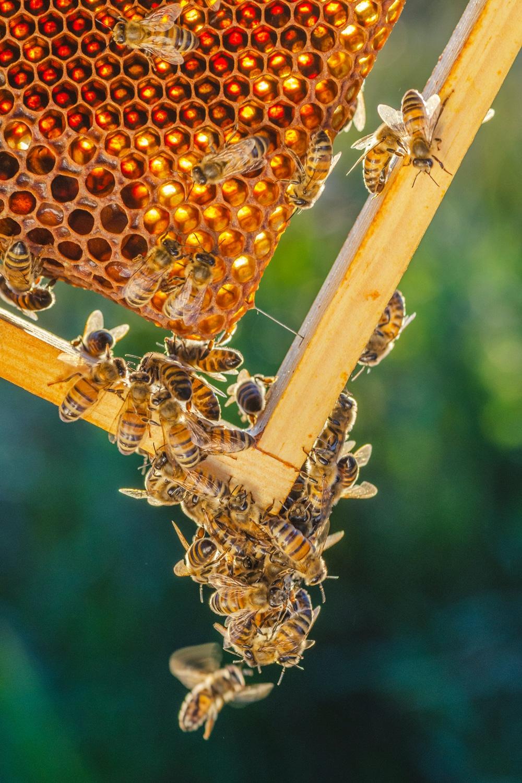 utiliser cire abeille pour la maison