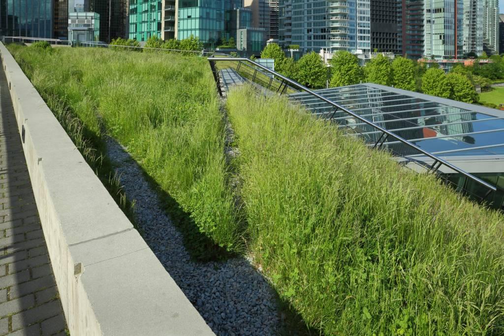 Des toits végétalisés pour des villes plus durables