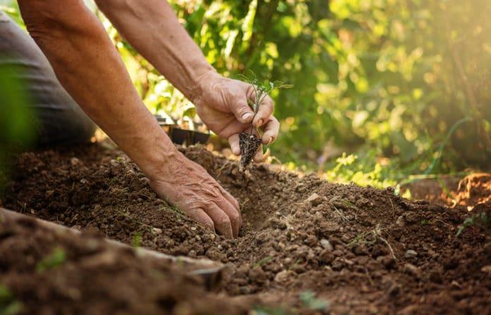 comment eviter la fonte des semis