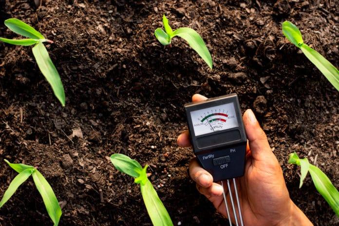 Terre acide causes, inconvénients, quels végétaux planter