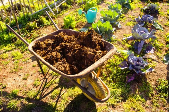 Potasse organique son rôle pour le jardin