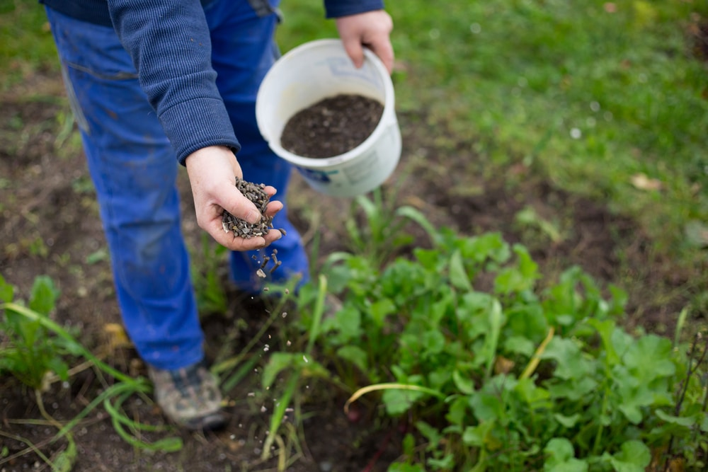 mettre potasse organique jardin