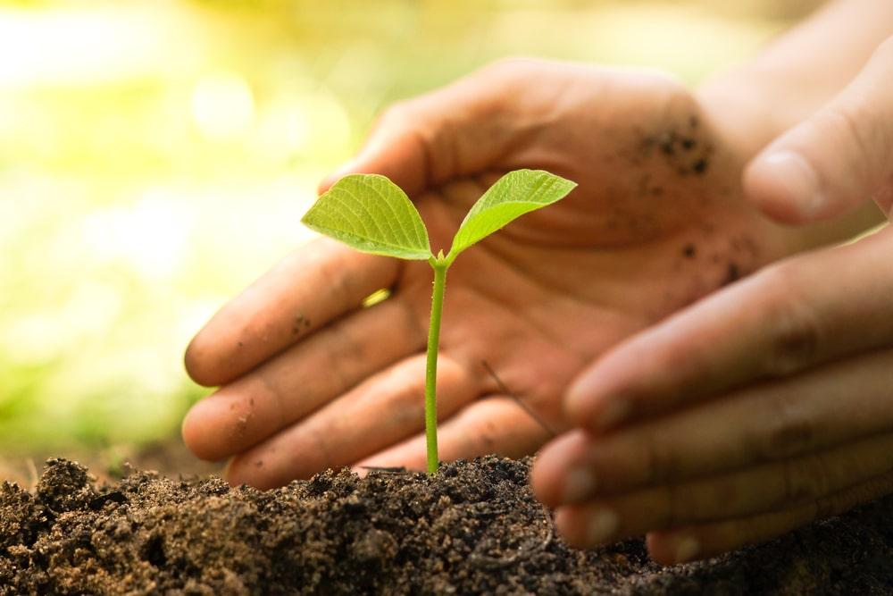 potasse organique jardin