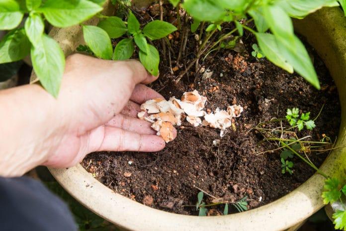 Les engrais naturels à faire soi même