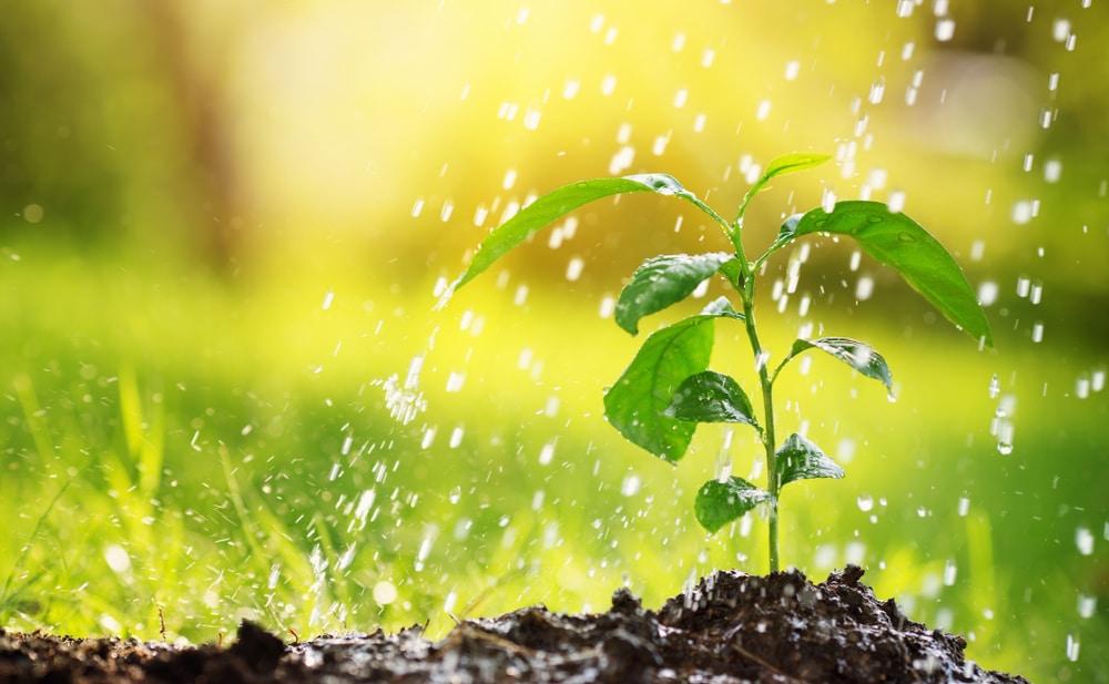 arrosage automatique potager et jardin
