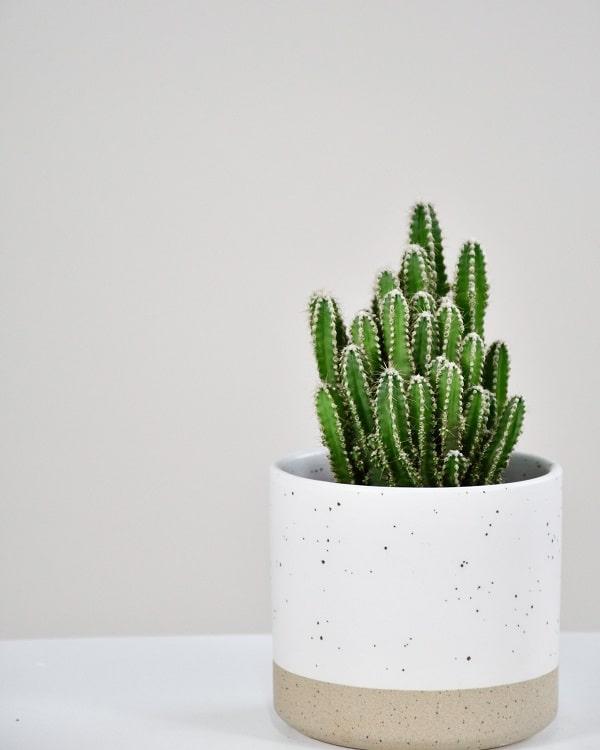 Quelle plante grasse pour l'intérieur
