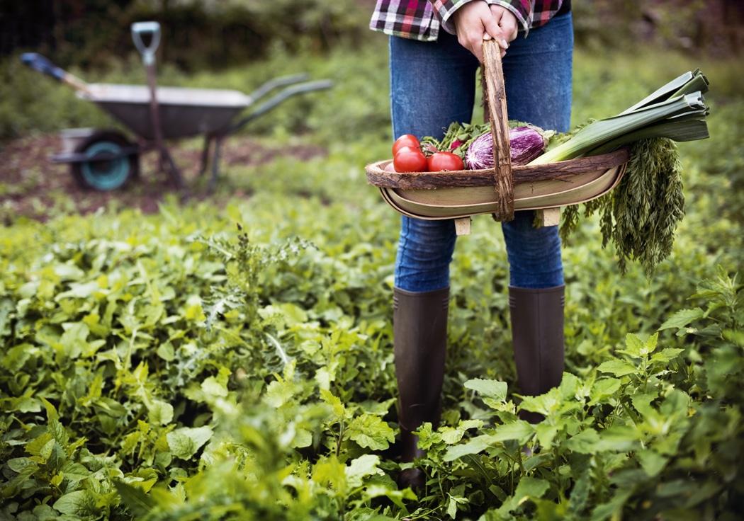 cuisiner les legumes frais de son portager avantages
