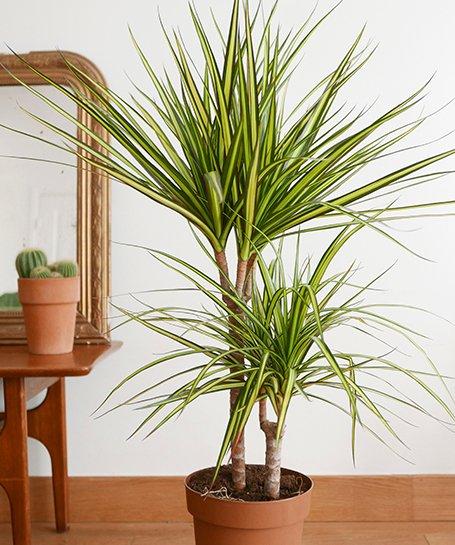 plante grasse pour intérieur