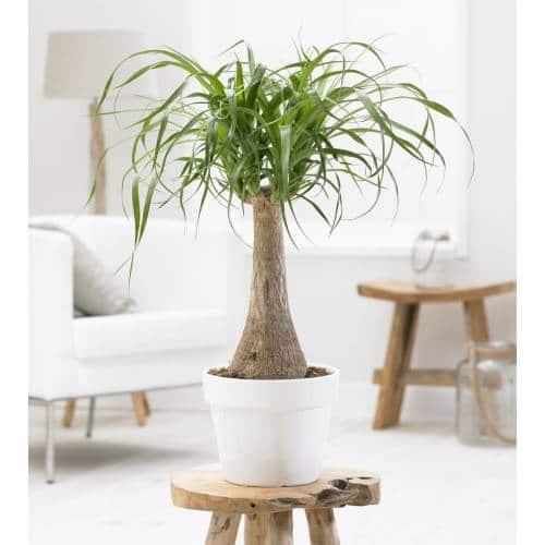 une plante d'intérieur grasse