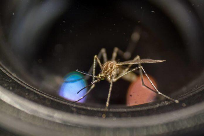 Moustiques : comment ne plus subir les attaques !