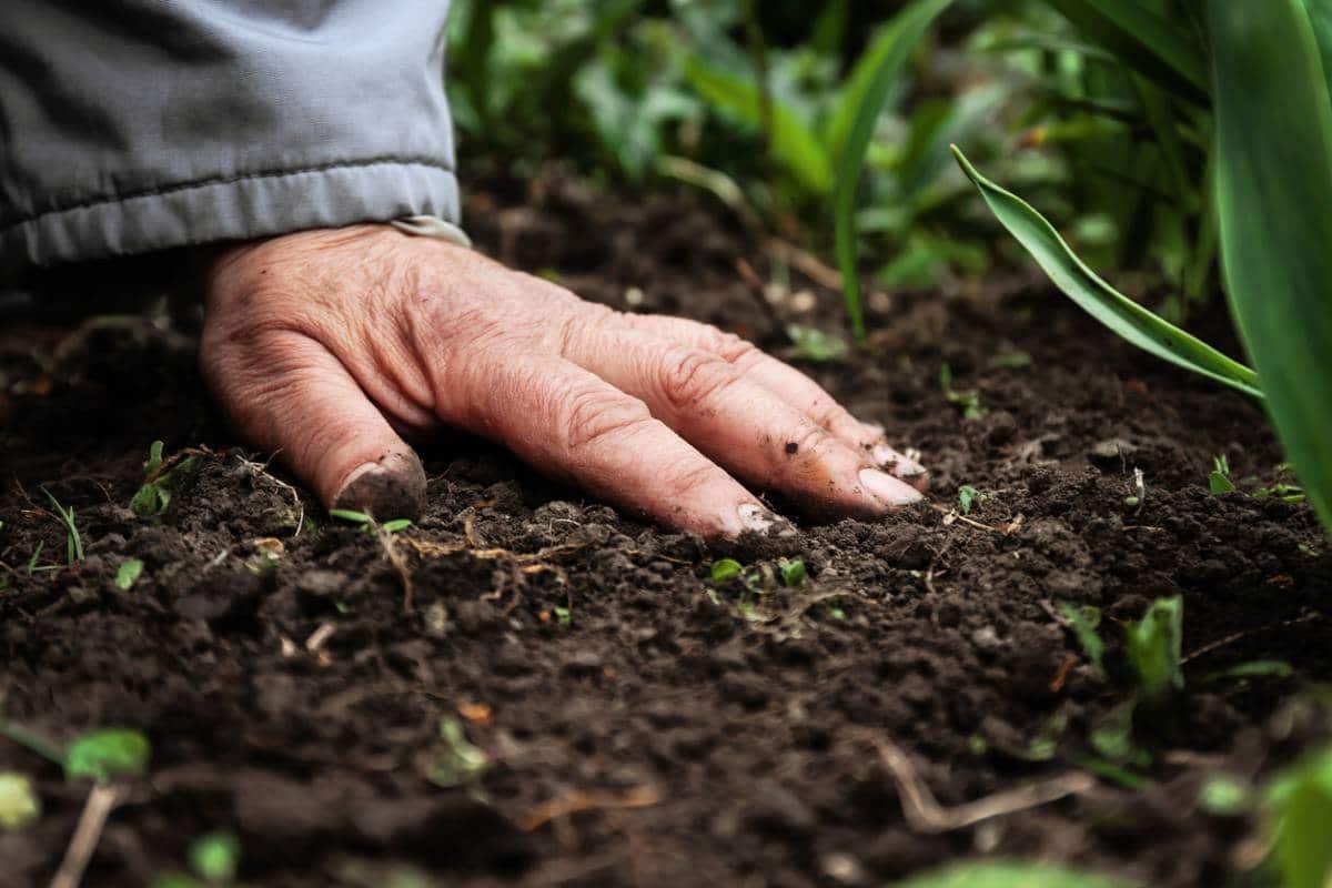 Les alternatives pour jardiner au naturel