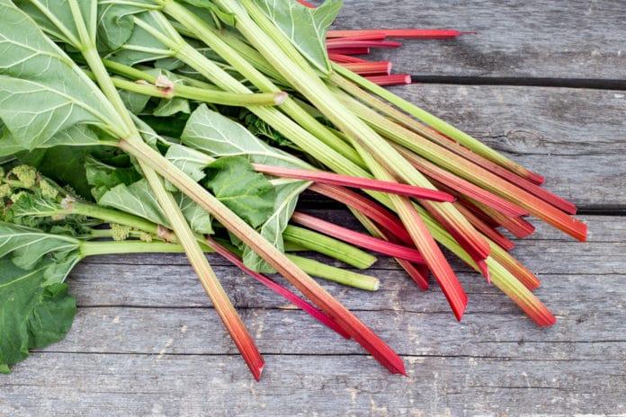 Les utilisations du purin de rhubarbe et la recette